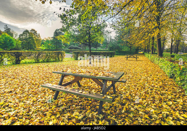 Autumn leaves on a bench in a park in autumn with colorful autumn maple leaves in yellow colors in the fall in october - Stock Image