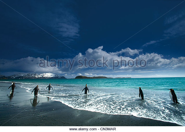 King penguins in sand and surf, South - Stock Image