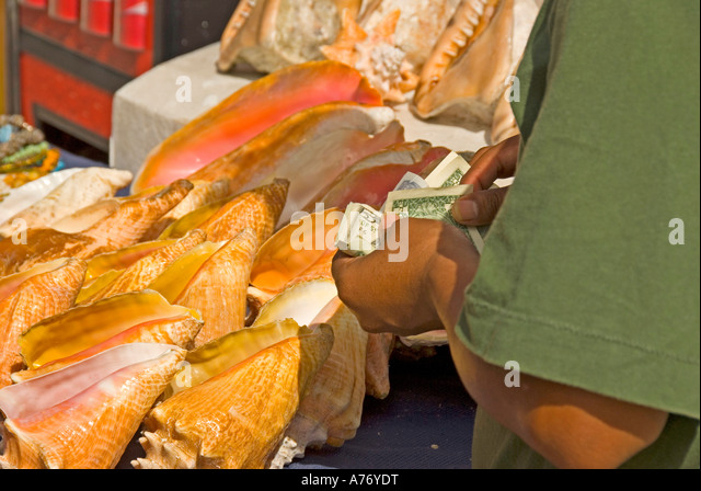 Cozumel Mexico San Miguel town seashells conch shell display - Stock Image