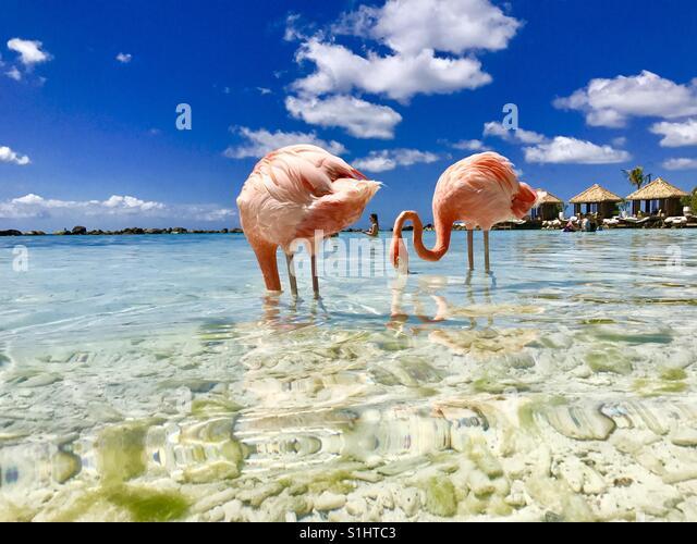 Flamingos on the beach - Stock-Bilder
