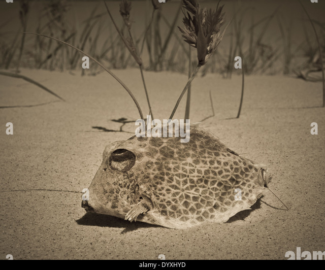 Fish scales texture stock photos fish scales texture for Puffer fish sand art