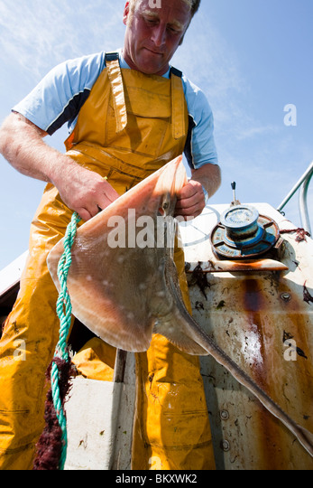 Portrait of a fisherman standing in a boat gutting a fish - Stock Image