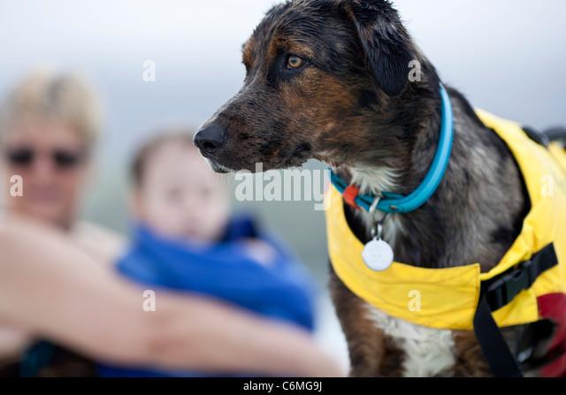 Dog on boat with life jacket. - Stock Image