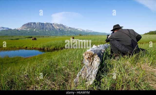 CAMERAMAN FILMS BEARS BEARS (2014) - Stock Image