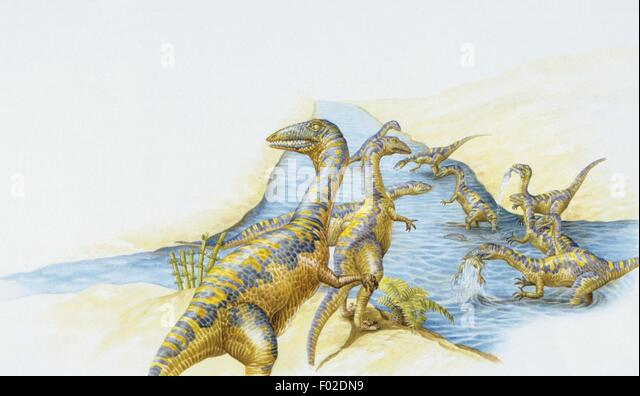 Palaeozoology - Triassic period - Dinosaurs - Coelophysis - Stock Image