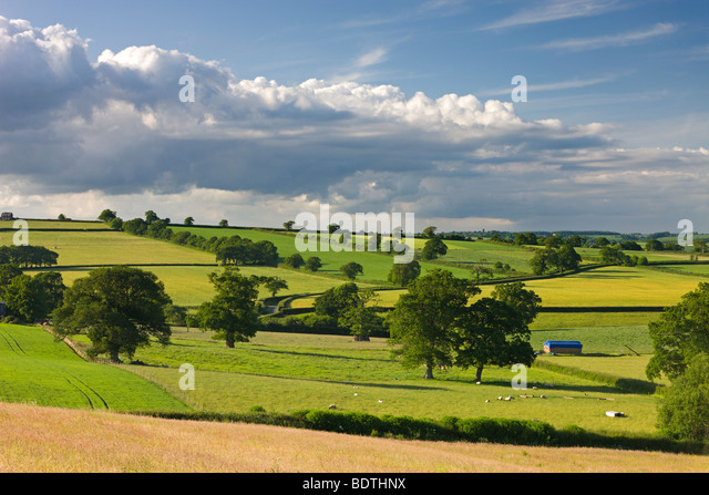 Rolling countryside near Broomhill, mid Devon, England. Summer (June) 2009 - Stock Image