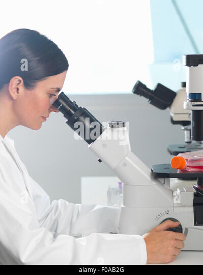 Scientist viewing cultures under inverted microscope for medical and pharmaceutical research - Stock-Bilder