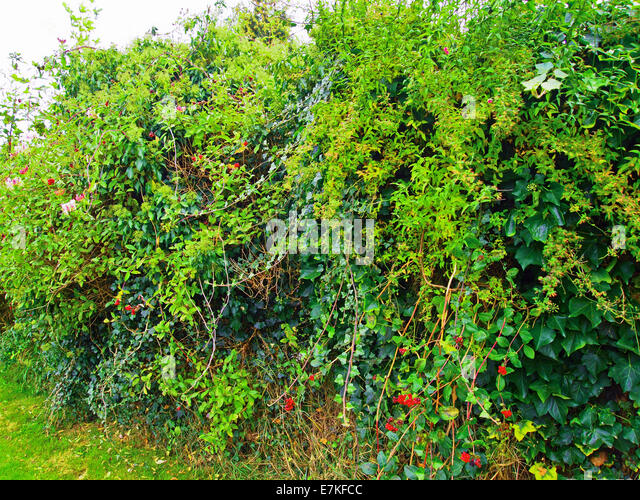 Vines Fence Stock Photos Amp Vines Fence Stock Images Alamy