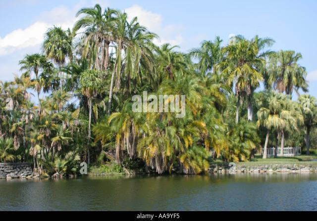 Florida, palm trees, lake, scenery, - Stock Image