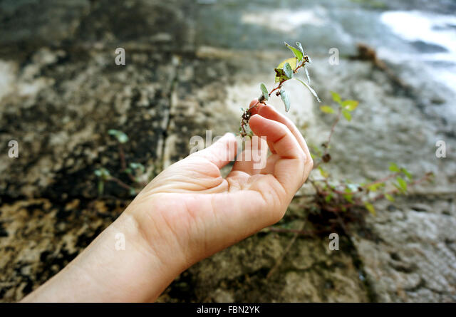 Cropped Image Of Person Holding Plant - Stock-Bilder