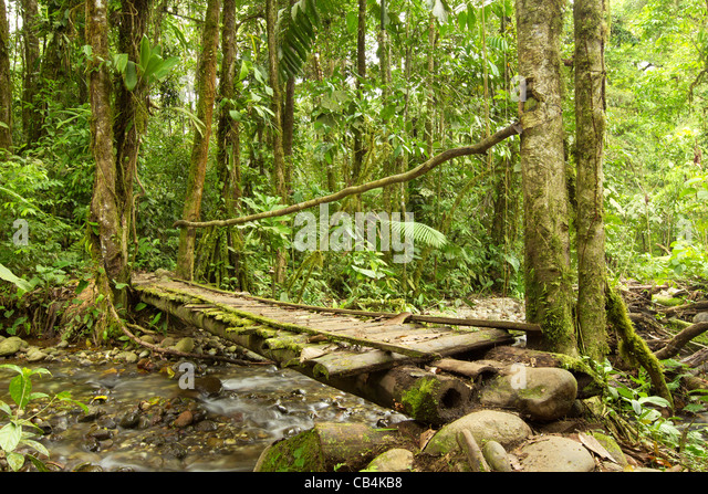 SMALL BRIDGE IN THE ECUADORIAN JUNGLE MADE FROM WOOD THE ONLY MATERIAL AVAILABLE IN THIS AREA - Stock-Bilder