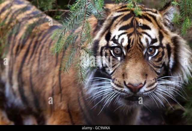 nato tiger meet 2014 jagiellonian university