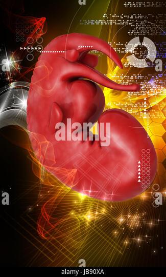 Foetus Human Stock Photos & Foetus Human Stock Images