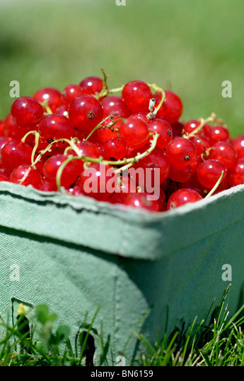 Red Currants - Stock Image