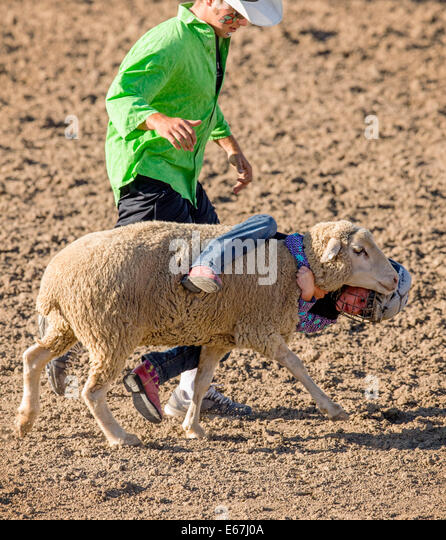 Young child riding a sheep in the mutton busting competition event, Chaffee County Fair & Rodeo - Stock Image