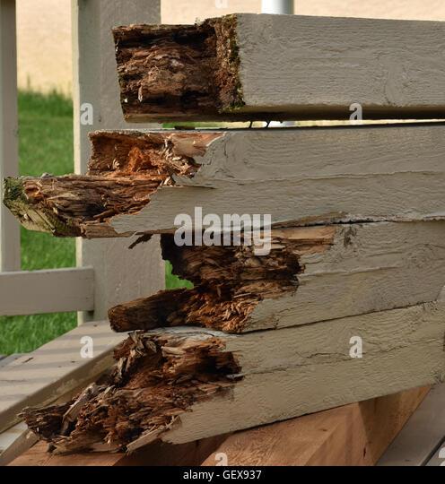Decayed cedar post - Stock Image