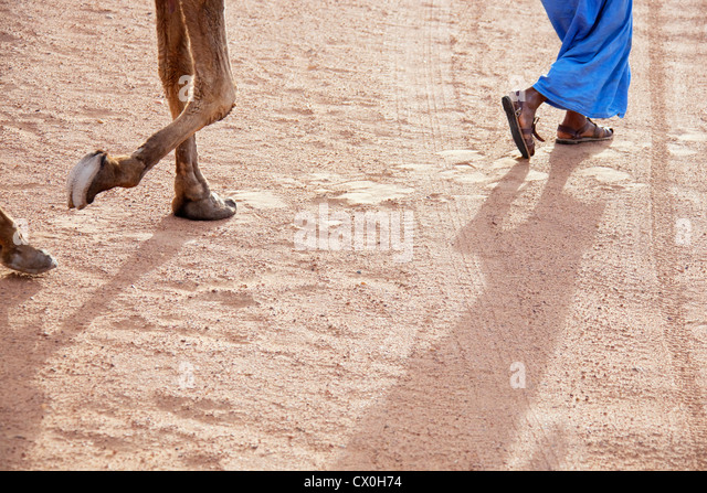 Legs of a man and a camel in desert sand. - Stock Image
