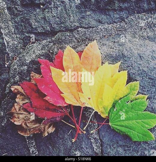 Colors - Stock-Bilder