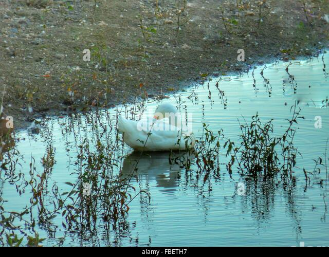 Themes River Stock Photos & Themes River Stock Images - Alamy