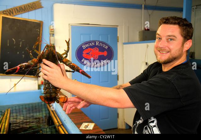Massachusetts Cape Cod Dennis Port Swan River Fish Market man employee holding lobster seafood - Stock Image