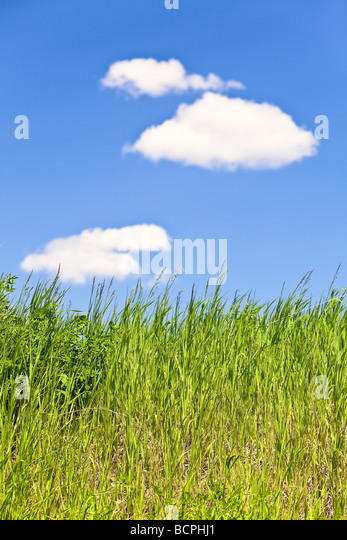 Grass and Cumulus clouds, Hecla Island Provincial Park, Manitoba, Canada. - Stock Image