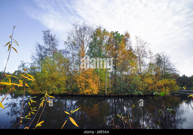 Autumn island with colorful trees in autumn colors in a lake scenery in the fall with tree reflections in the water - Stock Image