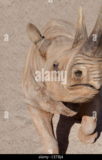 Rhinoceros close up - Stock Image