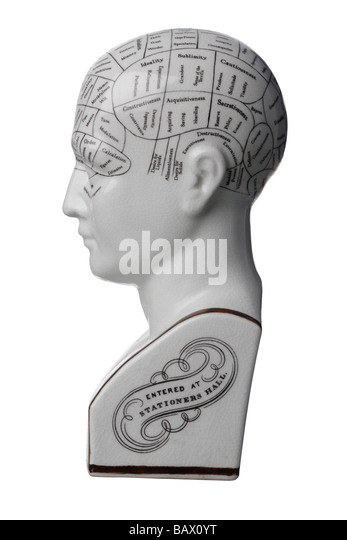 Phrenology ceramic bust head - Stock-Bilder