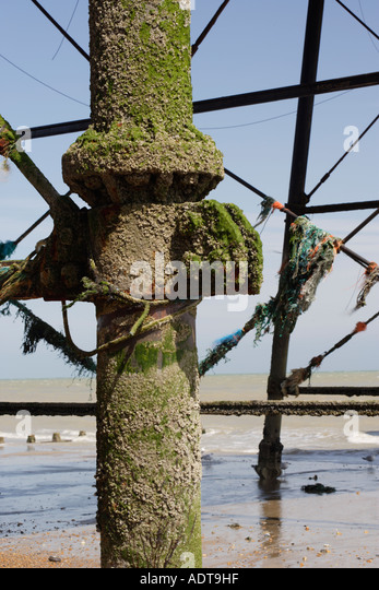barnacles on the corroded metal structure of a pier - Stock Image