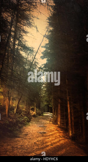 path in the forest - Stock-Bilder