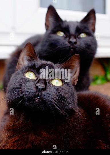 feral cat uk stock photos amp feral cat uk stock images alamy