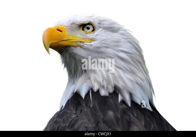 Cancer charity eagle head house island light light shaved