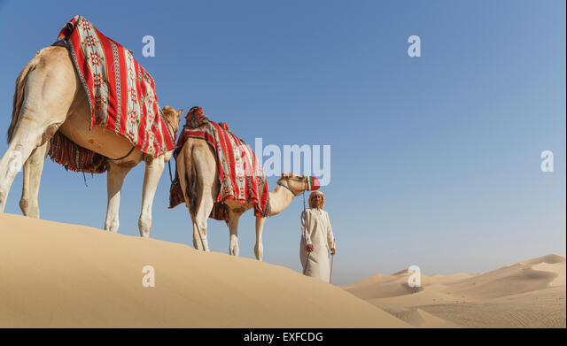 Bedouin leading two camels in desert, Dubai, United Arab Emirates - Stock Image
