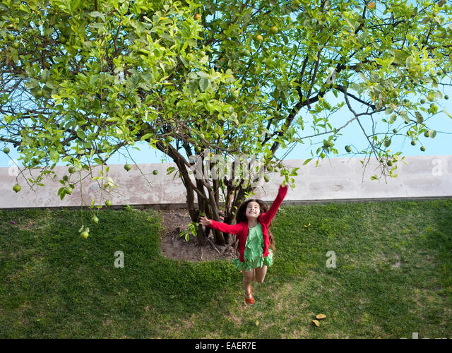 young girl jumps up to get a Lime from a Lime tree - Stock Image