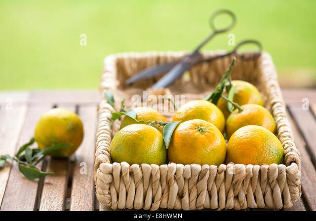 garden table with clementines in basket with vintage scissors - Stock-Bilder