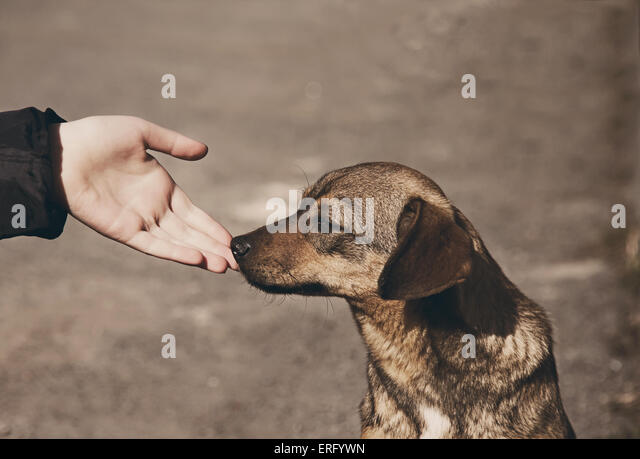 Helping child hand and lonely homeless dog with sad eyes - Stock Image