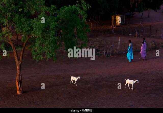Senegal, Sahel, Ferlo region, Widou Thiengoly, Farmyard - Stock Image