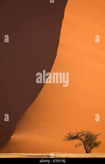 Tree in front of sand dune, Namib Desert, Namibia, Africa - Stock Image