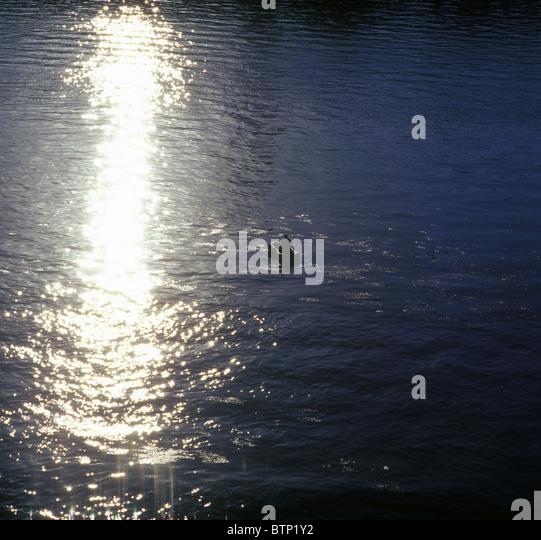 Fishing at sunset. - Stock-Bilder