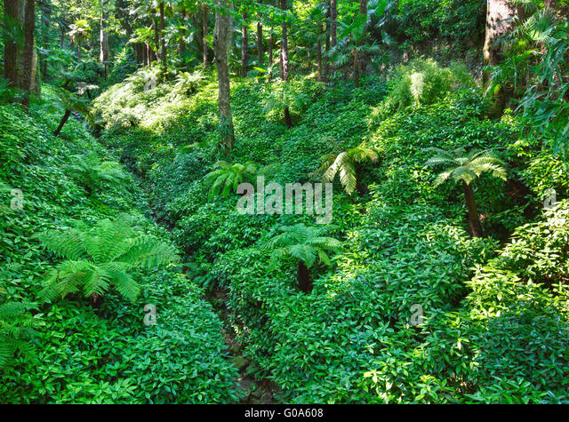 Tropical Landscaping Stock Photos Tropical Landscaping Stock Images Alamy