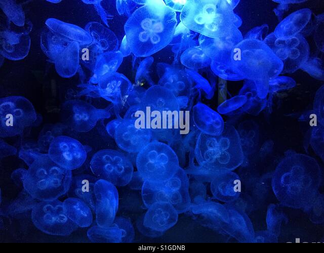 Blue jellyfish - Stock-Bilder