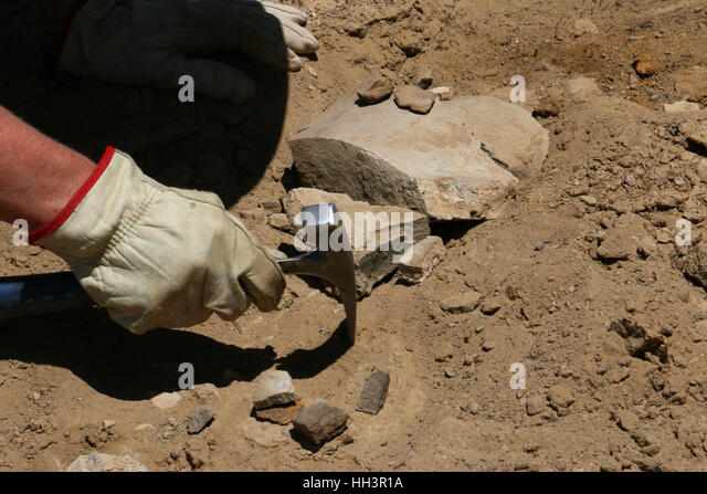 Paleontologists digging dinosaur bone fossils Utah Great Basin desert scientist - Stock Image