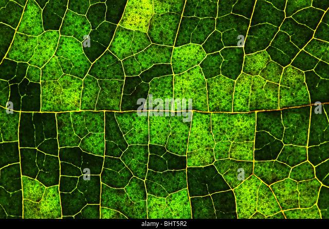 Macro of a leaf - Stock-Bilder