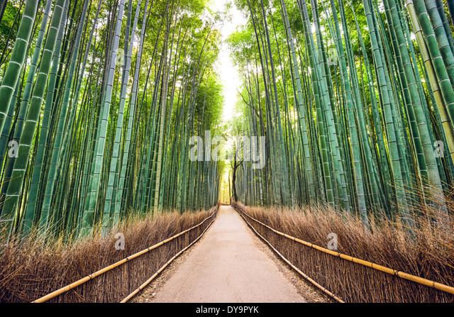 Bamboo forest of Kyoto, Japan. - Stock Image