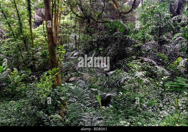 Jungle,Lake Gardens area,Kuala Lumpur - Stock-Bilder