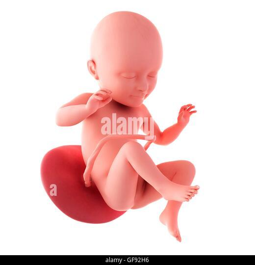 Foetus At 34 Weeks Stock Photos & Foetus At 34 Weeks Stock ...