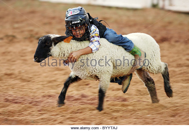 Young Cowboys participate in 'Mutton Bustin' - Stock Image
