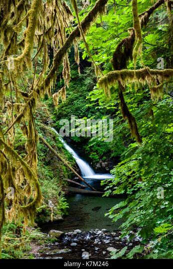Goldstream Falls - Goldstream Provincial Park; Victoria, Vancouver Island; British Columbia, Canada - Stock Image