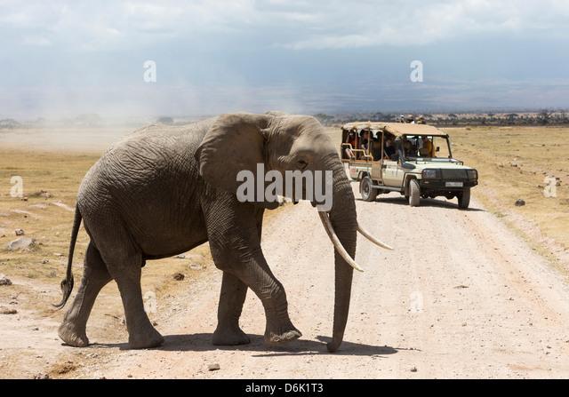 African elephant (Loxodonta africana) and tourists, Amboseli National Park, Kenya, East Africa, Africa - Stock Image
