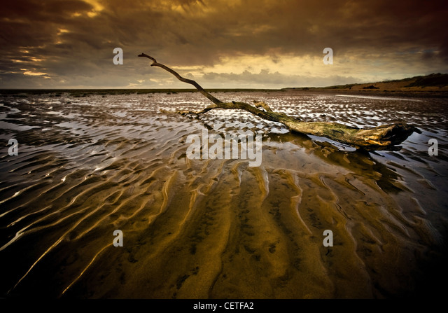 Washed up drift wood on a windswept beach at Fleetwood. - Stock Image